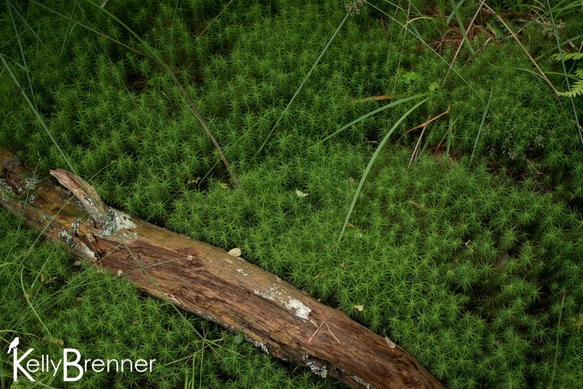 365 Nature – Day 210