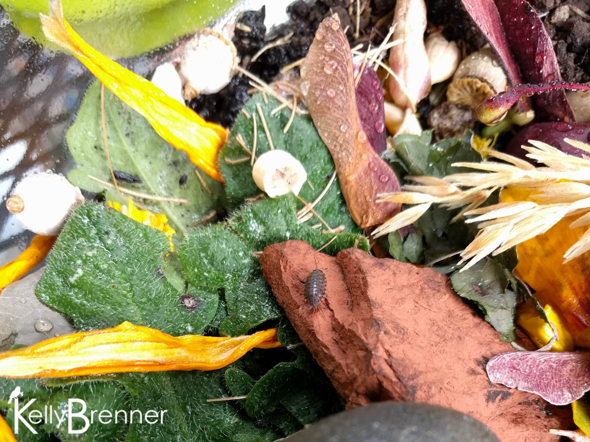 365 Nature – Day 243
