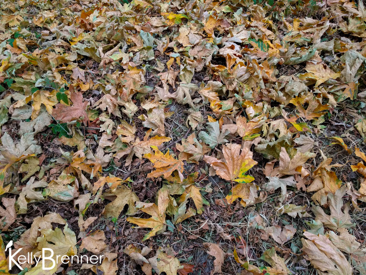 365 Nature – Day 245