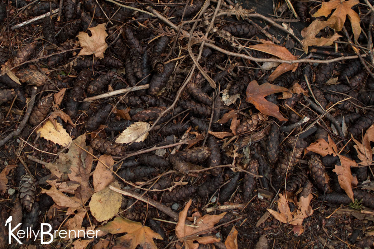 365 Nature – Day 251