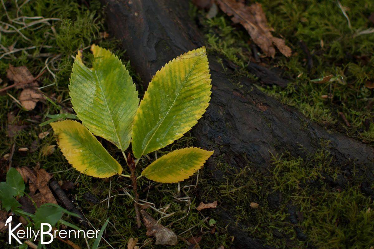365 Nature – Day 263