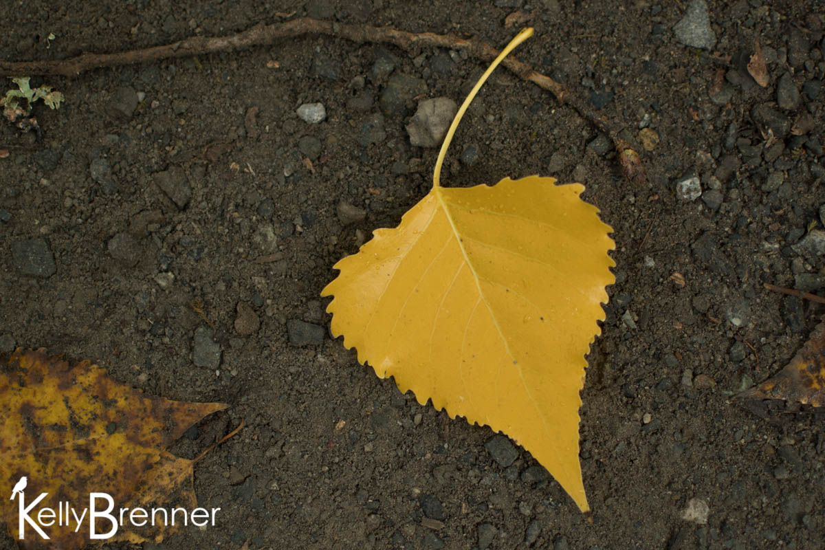 365 Nature – Day 278