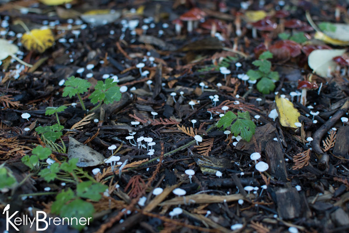365 Nature – Day 299