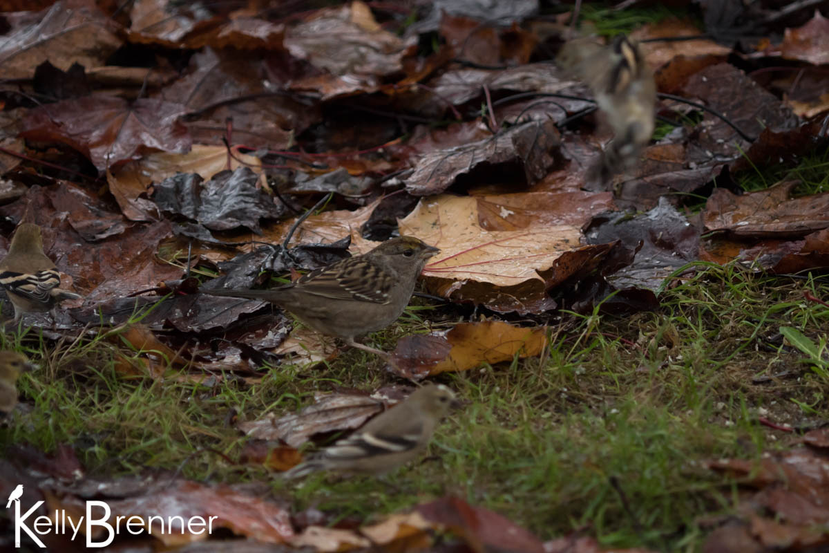 365 Nature – Day 303