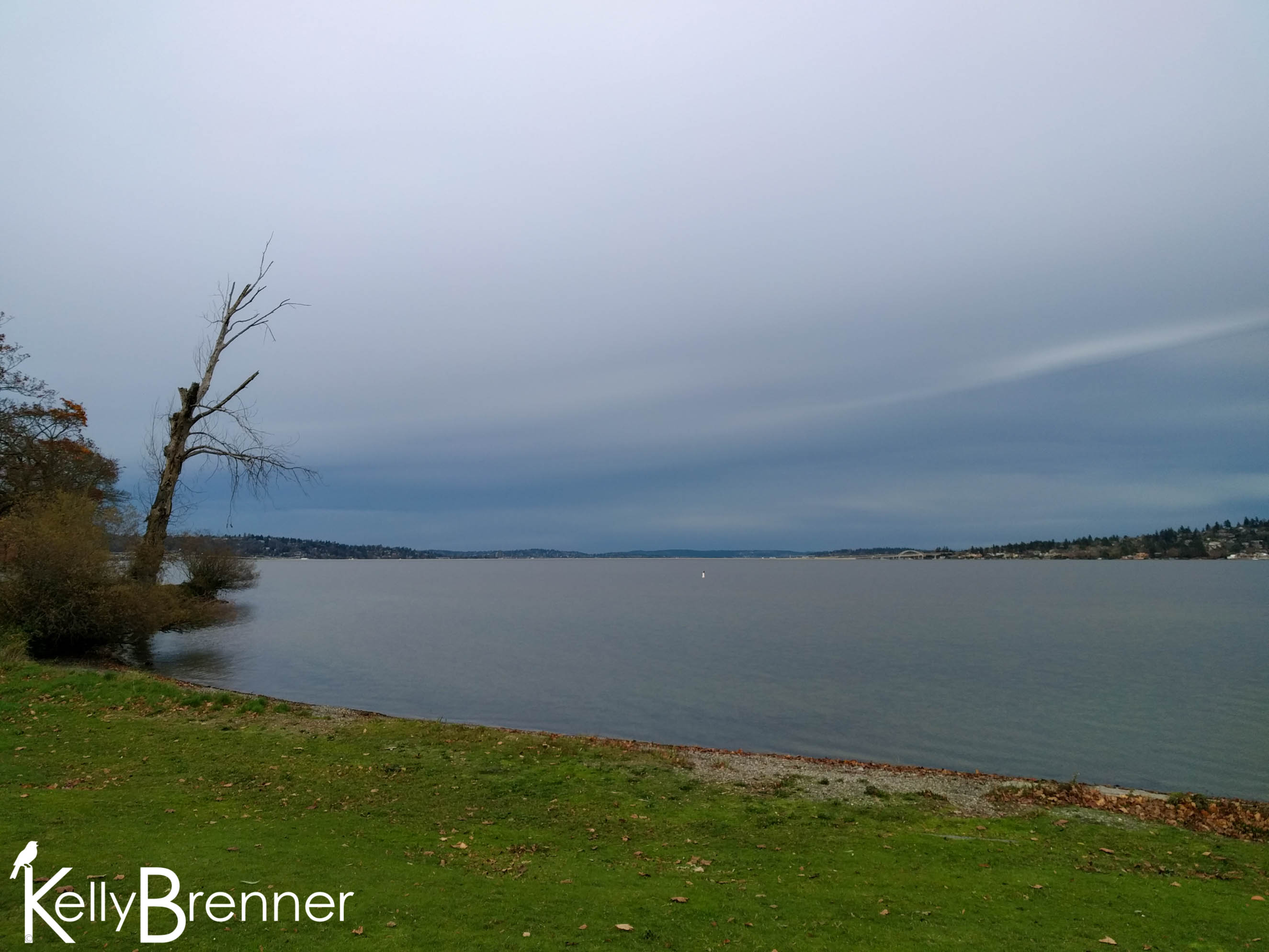 365 Nature – Day 323