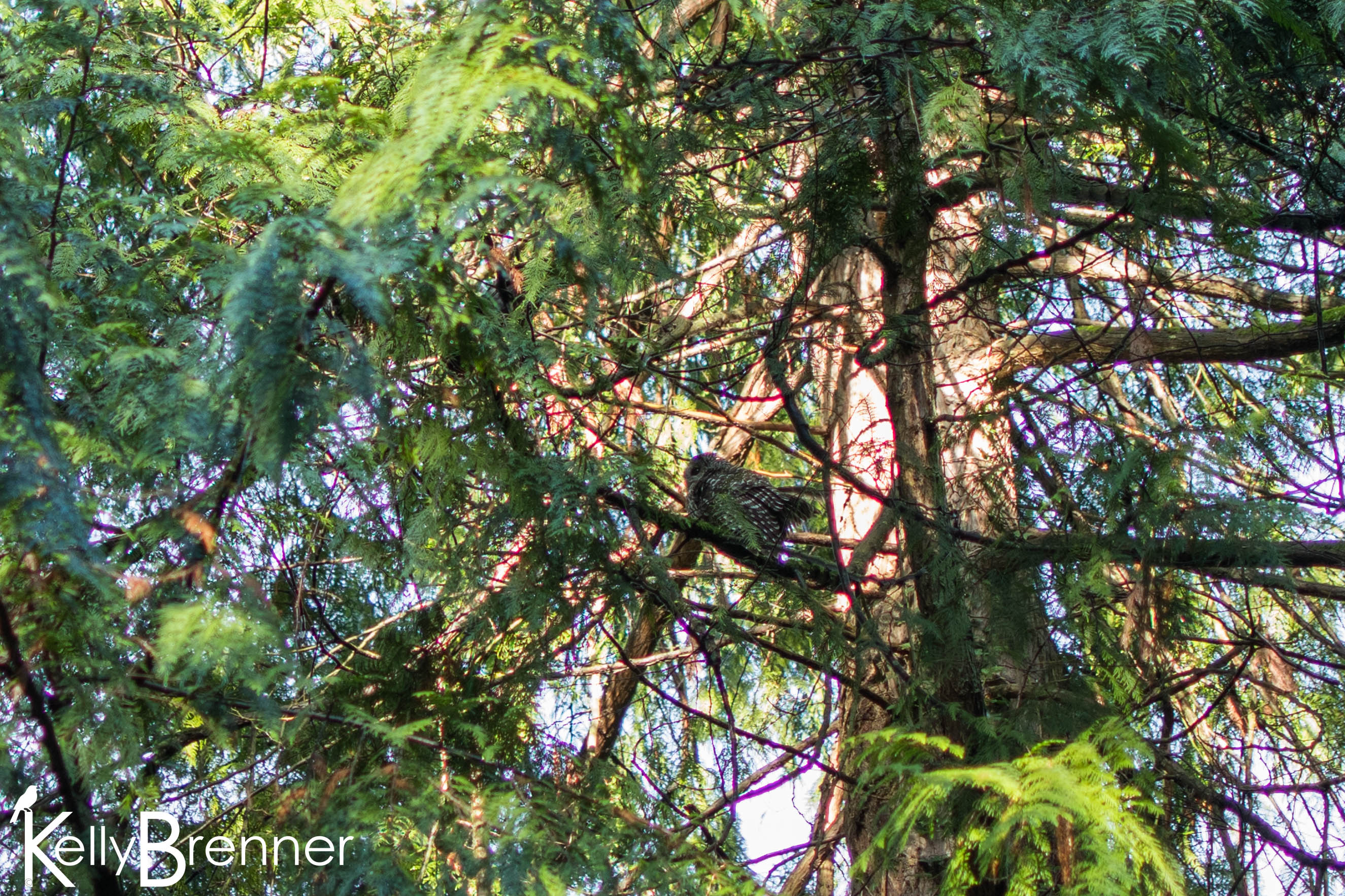 365 Nature – Day 320