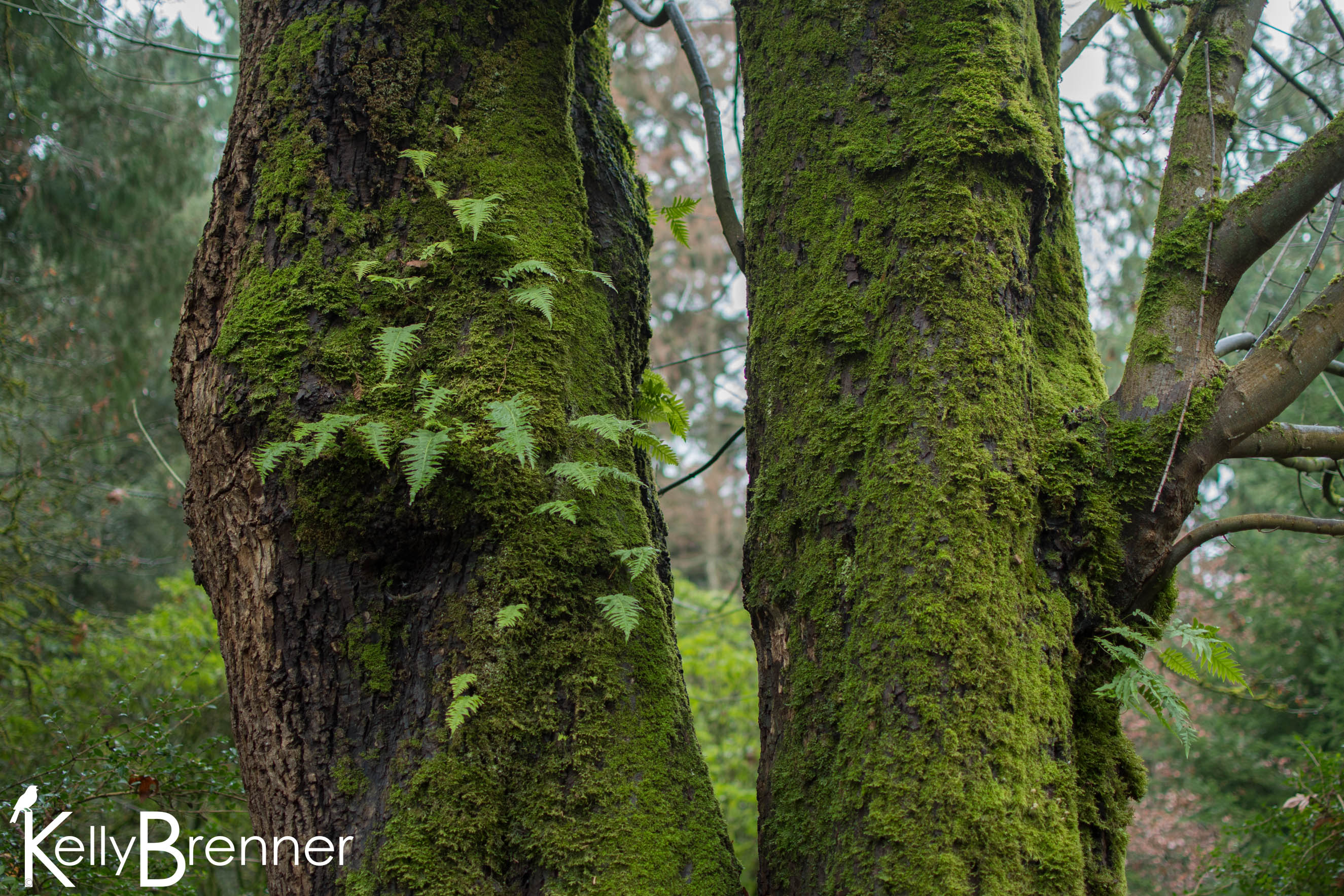 365 Nature – Day 347