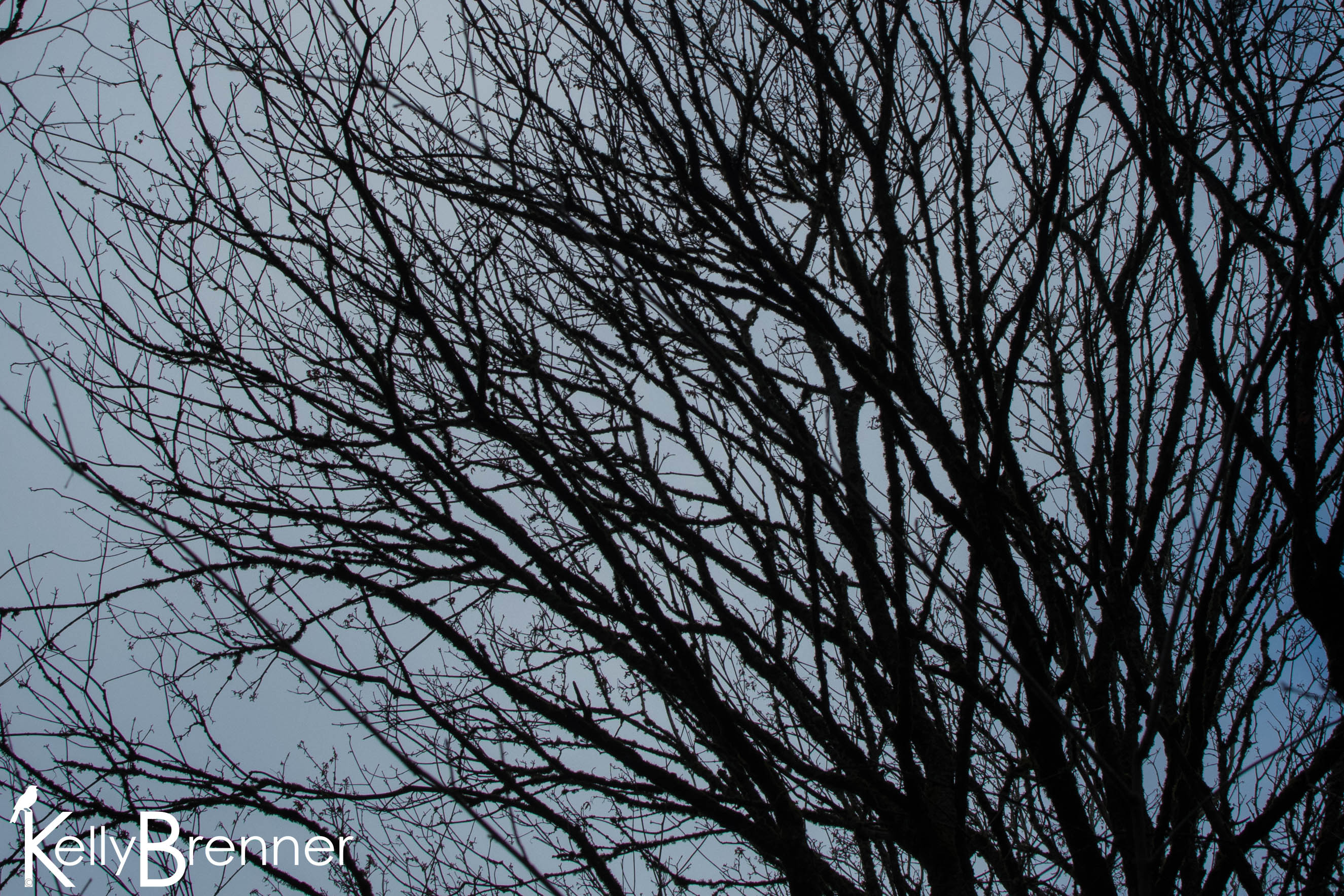 365 Nature – Day 348