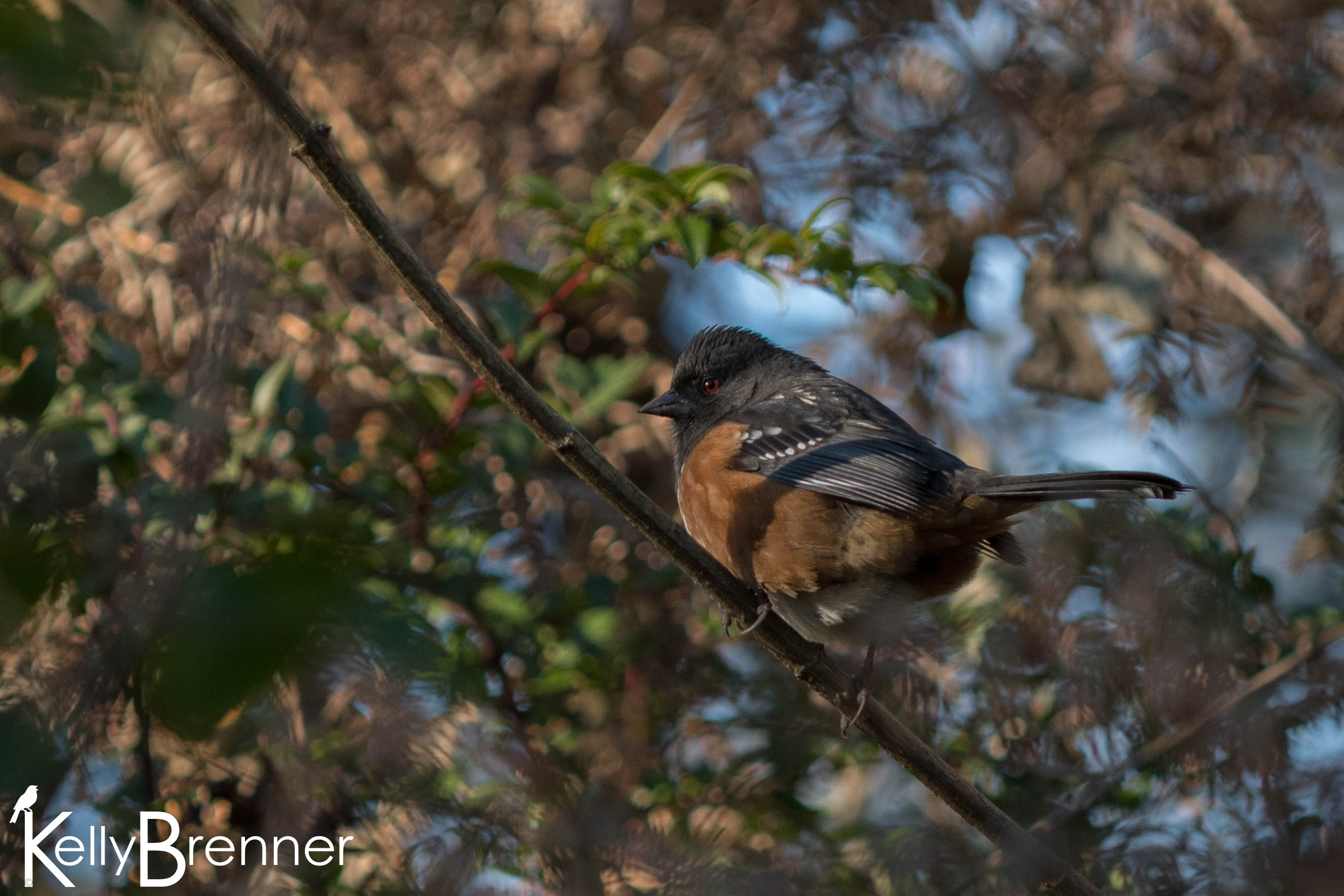 365 Nature – Day 351