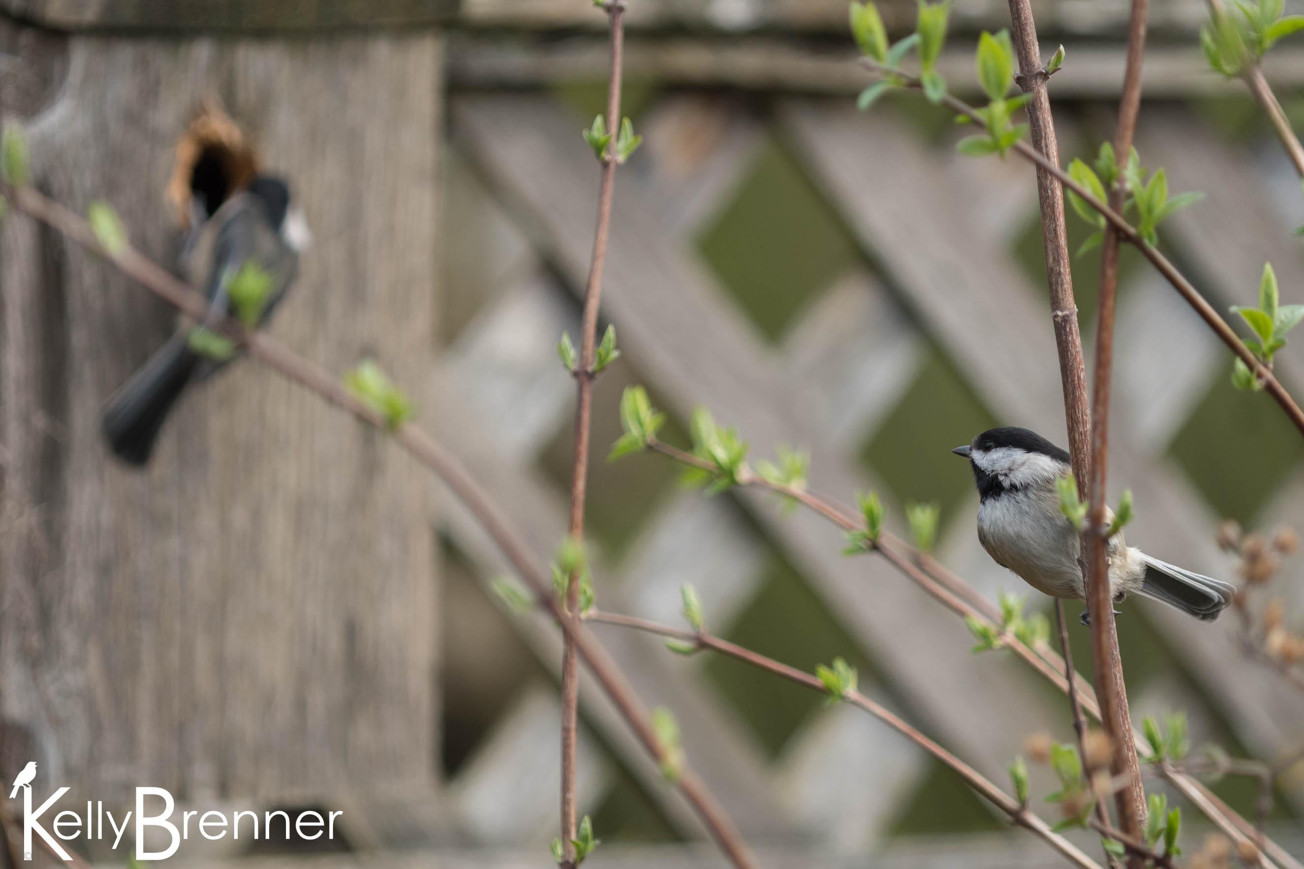 Diary of an Urban Wild Garden: Spring Nesting
