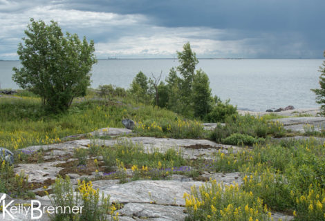 Field Journal: Harakka Island, Helsinki
