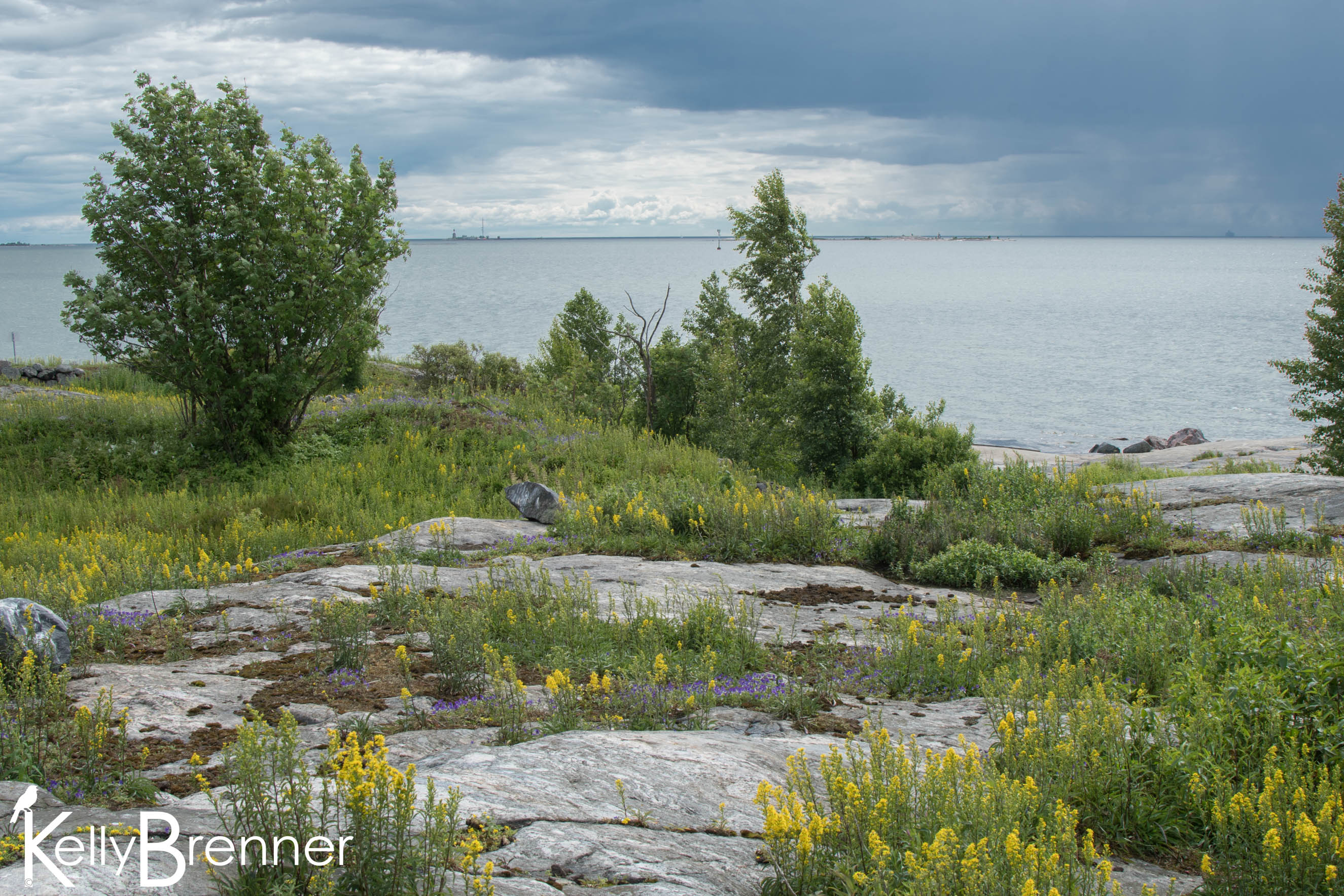 Field Journal: Harakka Island, Helsinki