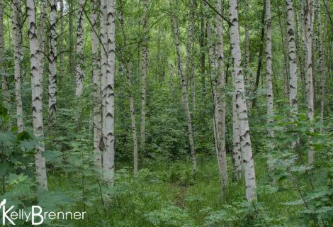 Field Journal: Viikki Nature Reserve