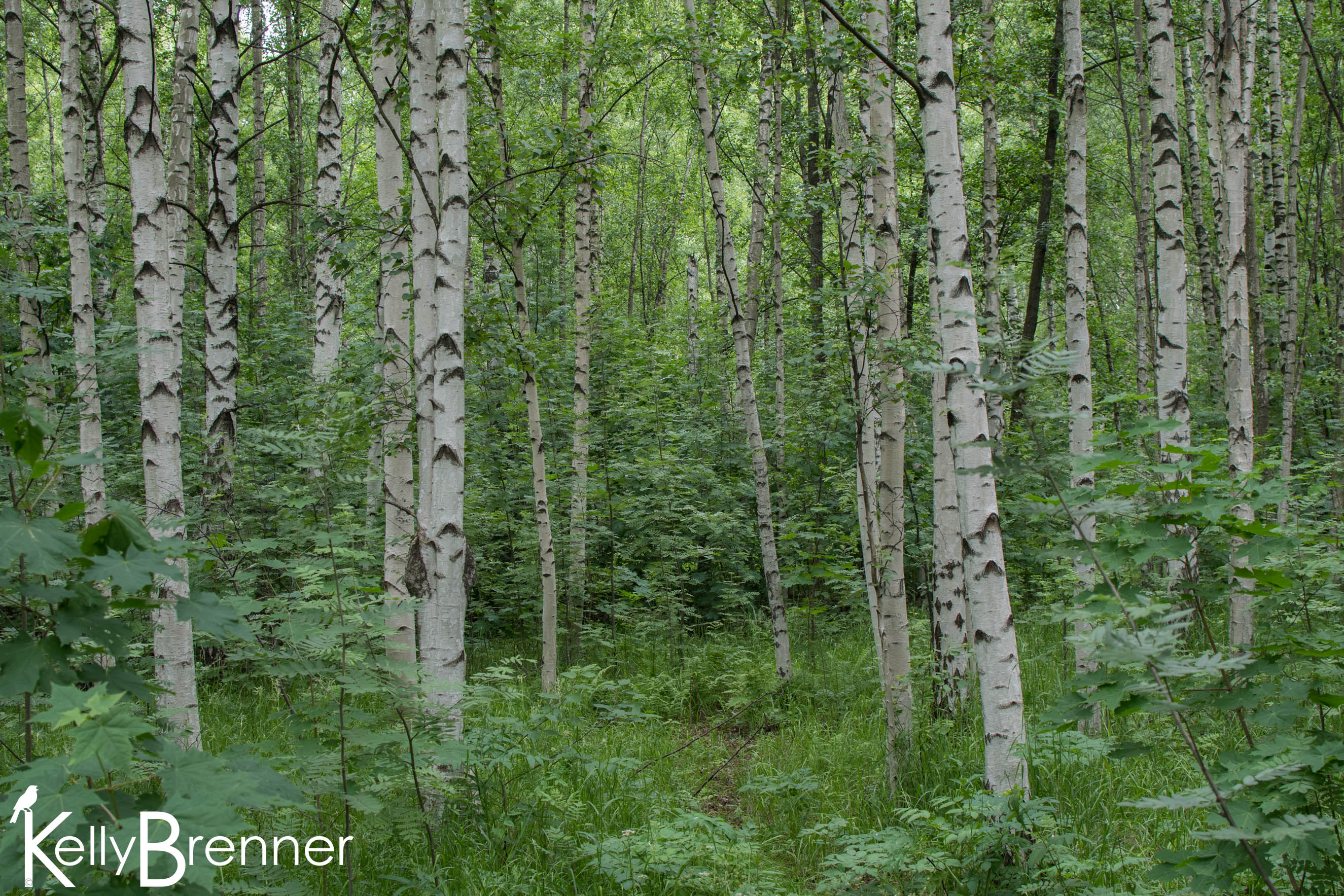 Field Journal: Viikki Nature Reserve