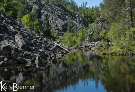 Field Journal: Pyhä-Luosto National Park – Part 2