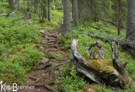 Field Journal: Pyhä-Luosto National Park – Part 3