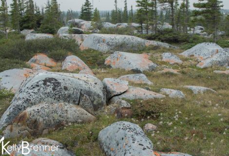 Field Journal: Churchill Rocket Range and Ramsay Trail