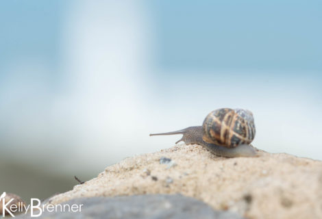Poem of the Week: The Snail