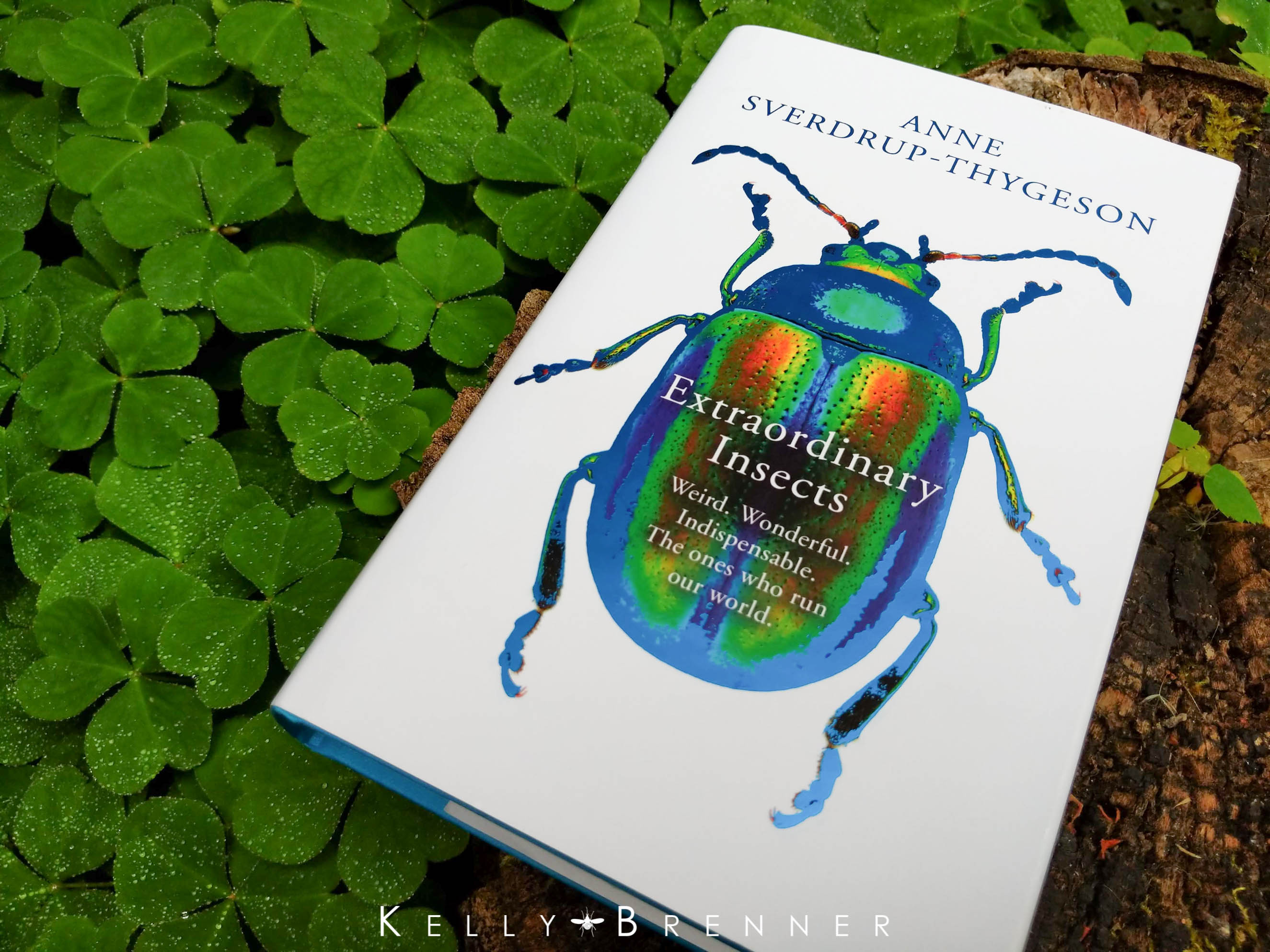 Book Review: Extraordinary Insects by Anne Sverdrup-Thygeson