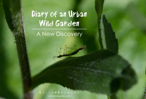Diary of an Urban Wild Garden: A New Discovery