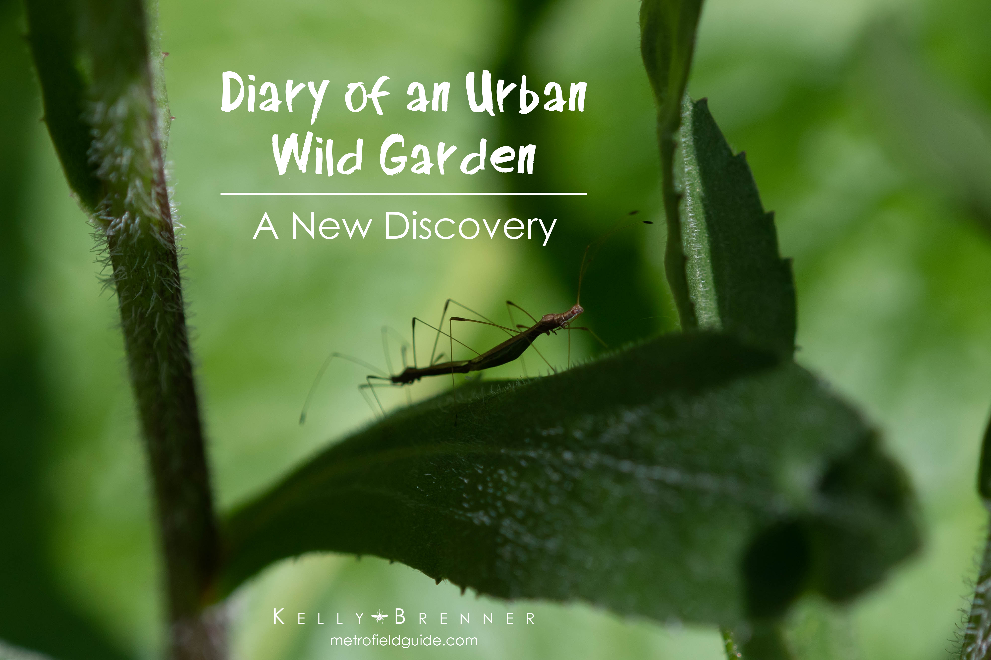 Diary of an Urban Wild Garden: A New Discovery