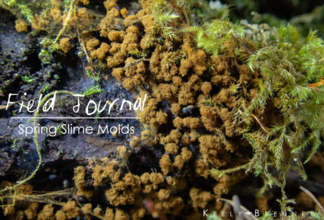 Field Journal: Spring Slime Molds at Seward Park