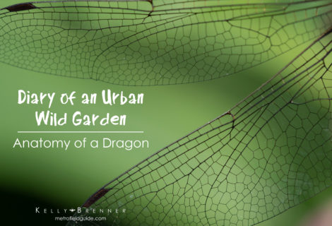 Diary of an Urban Wild Garden: Anatomy of a Dragon