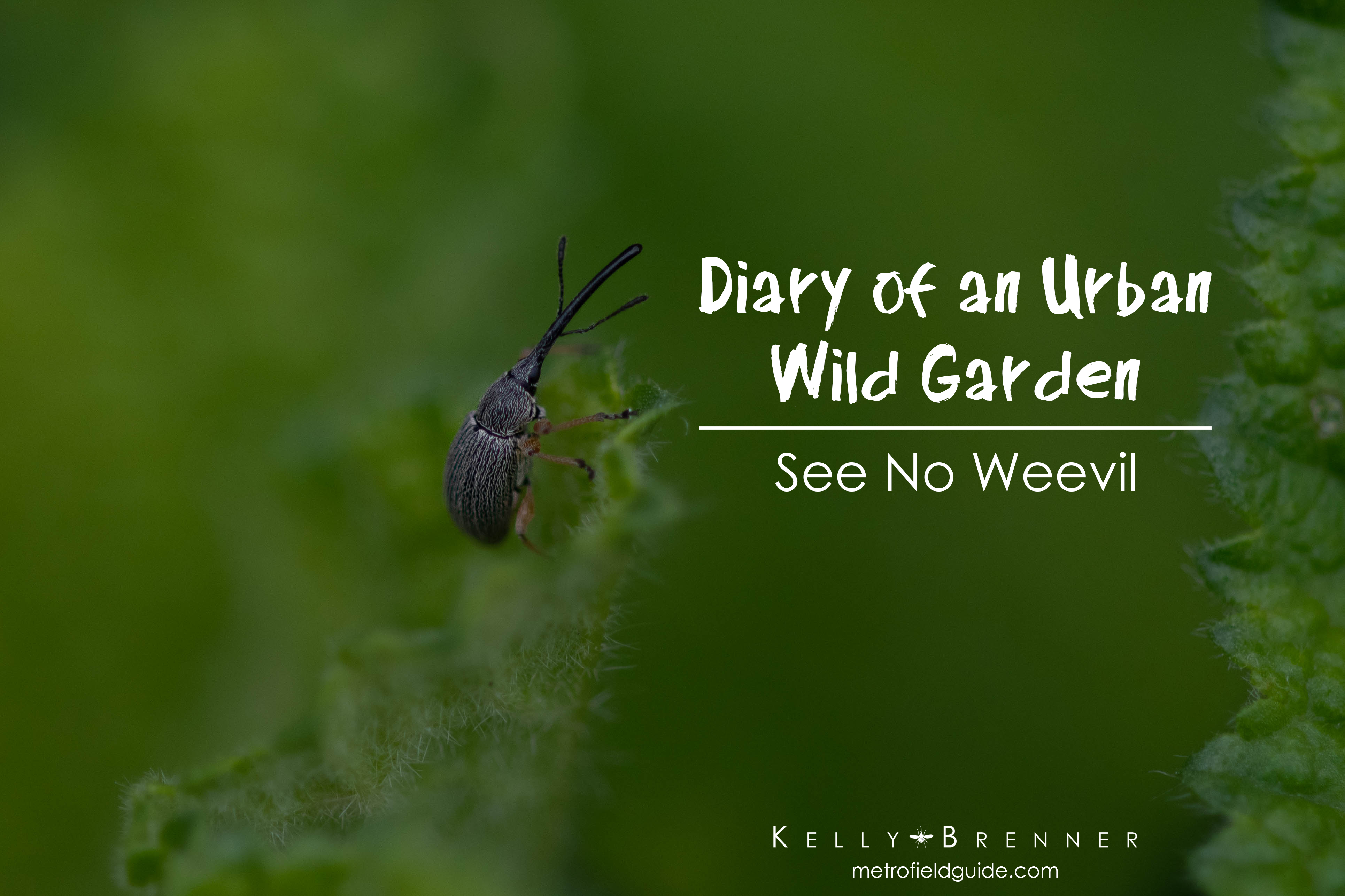 Diary of an Urban Wild Garden: See No Weevil
