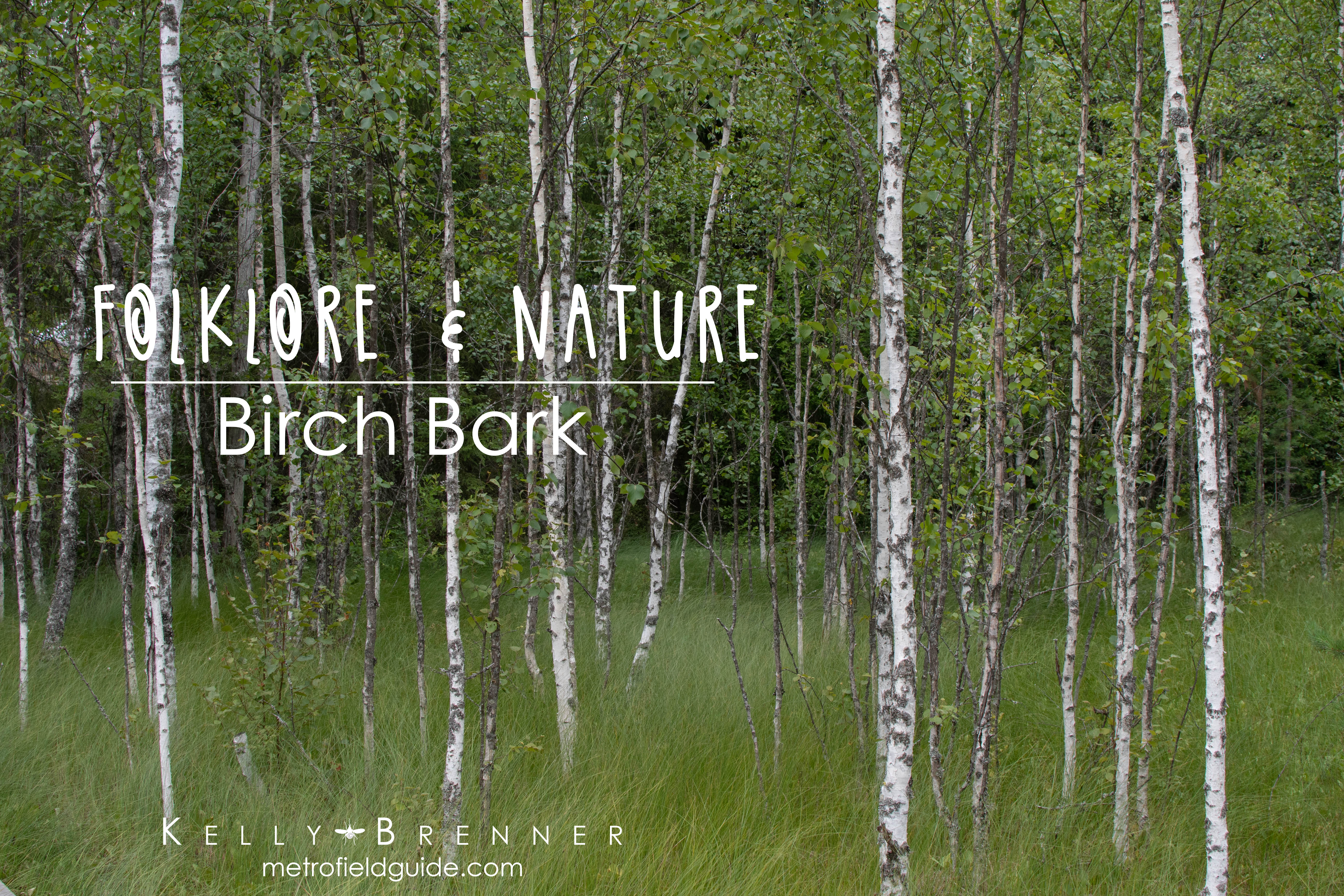 Folklore & Nature: Birch Bark