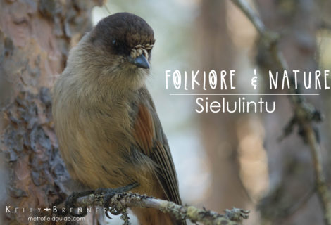 Folklore & Nature: Sielulintu