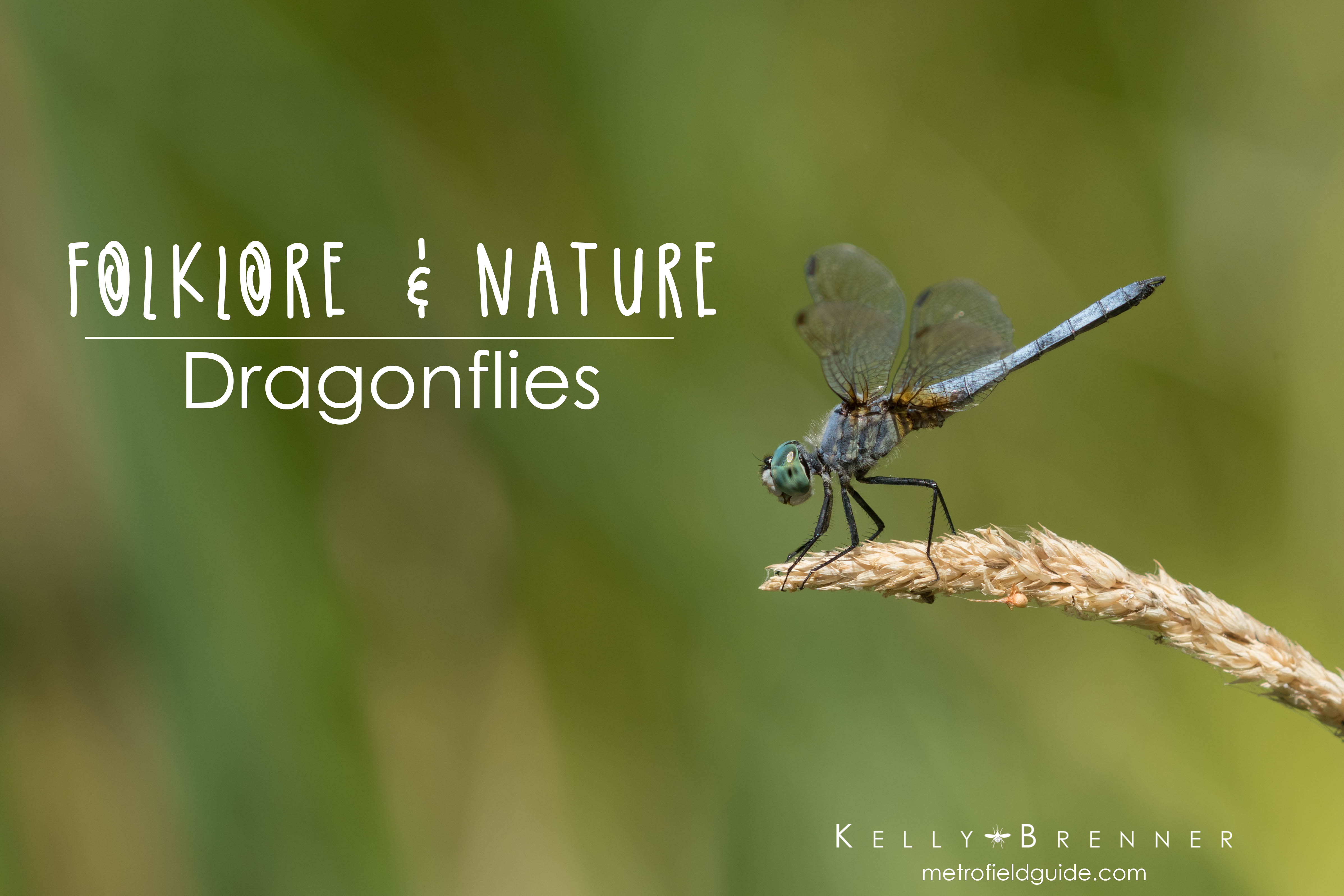 Folklore & Nature: Dragonflies