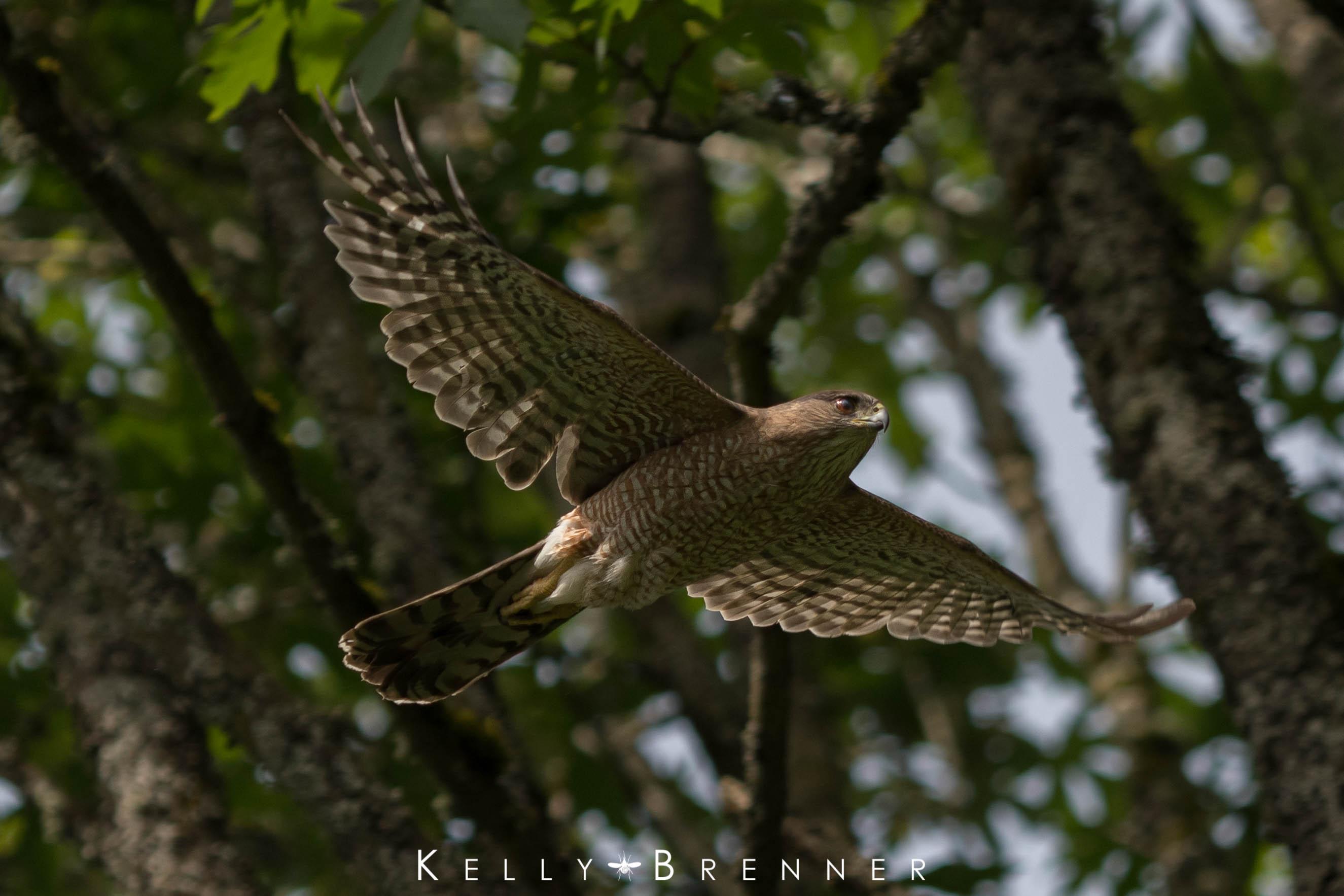 Poem of the Week: The Hawk