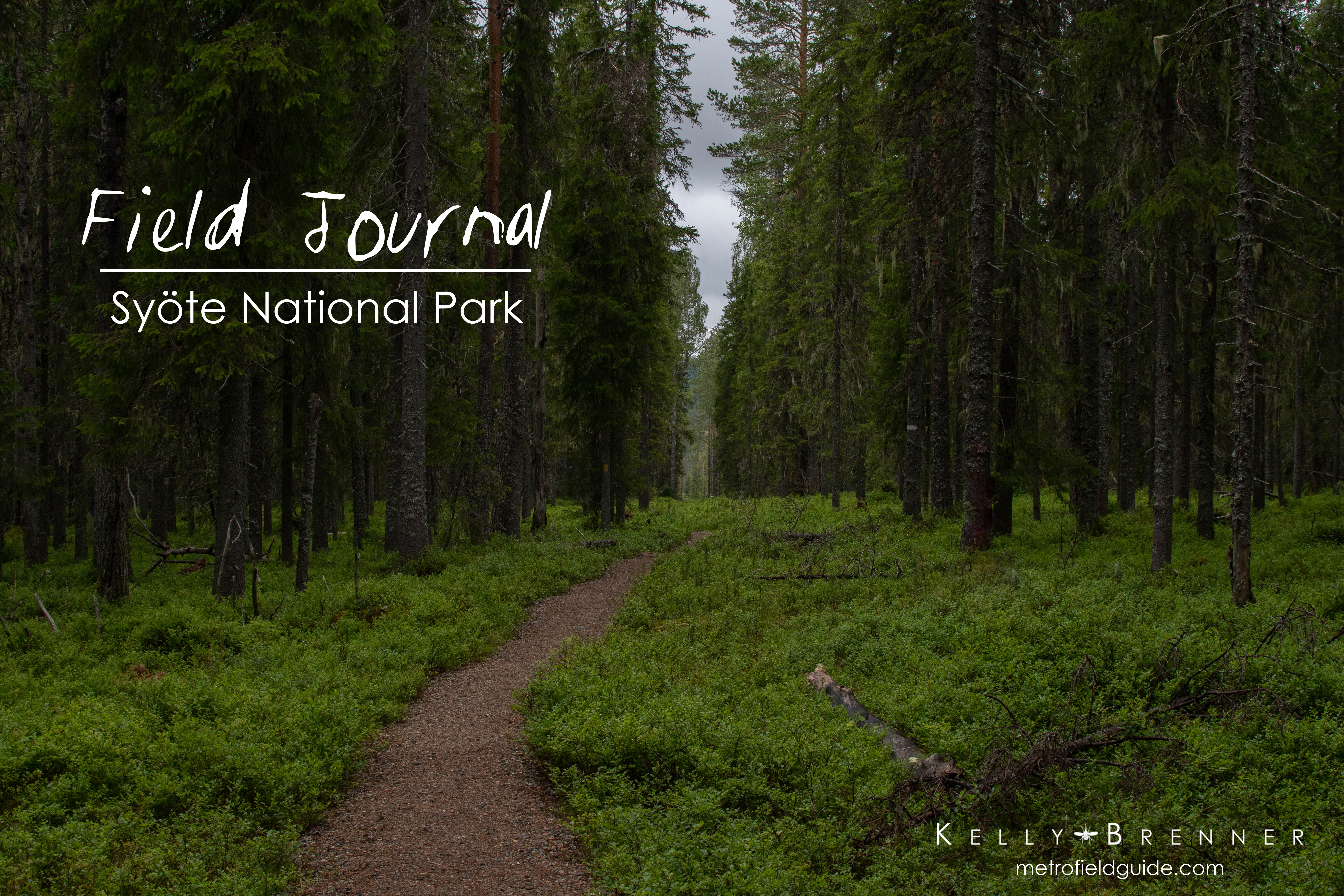 Field Journal: Syöte National Park