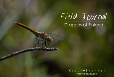 Field Journal: Dragons of Finland