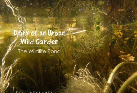 Diary of an Urban Wild Garden: Wildlife Pond