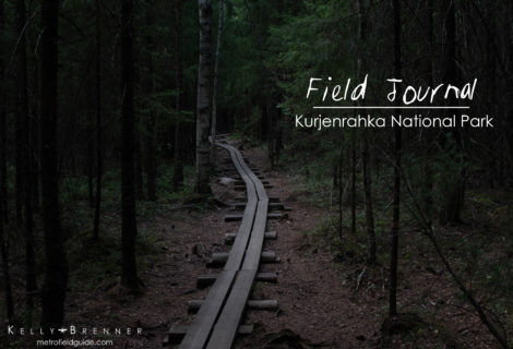 Field Journal: Kurjenrahka National Park