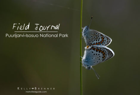Field Journal: Puurijarvi-Isosuo National Park