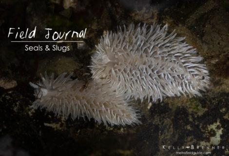Field Journal: Seals and Slugs