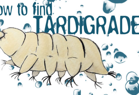 How to Find Tardigrades