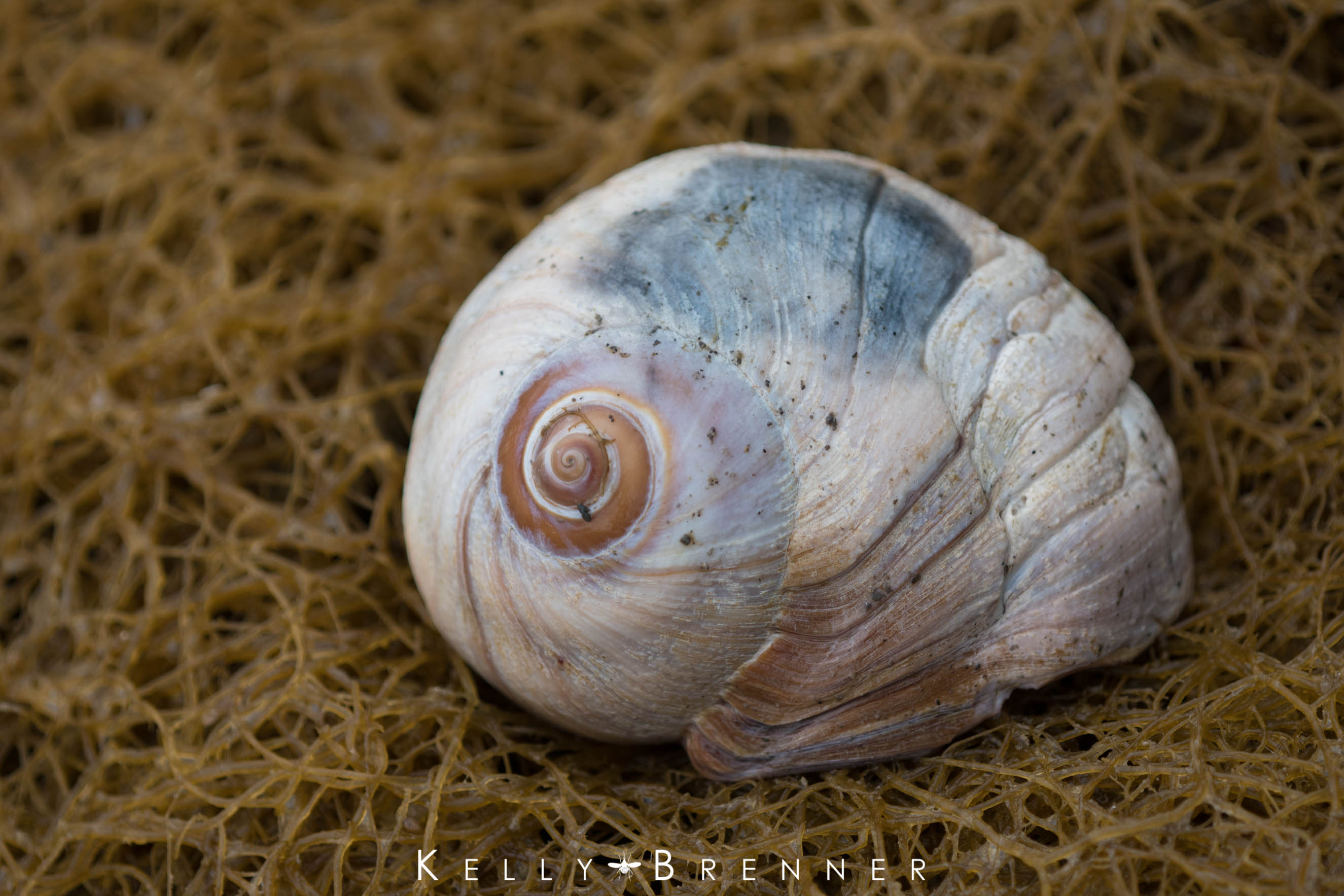 Poem of the Week: The Shell