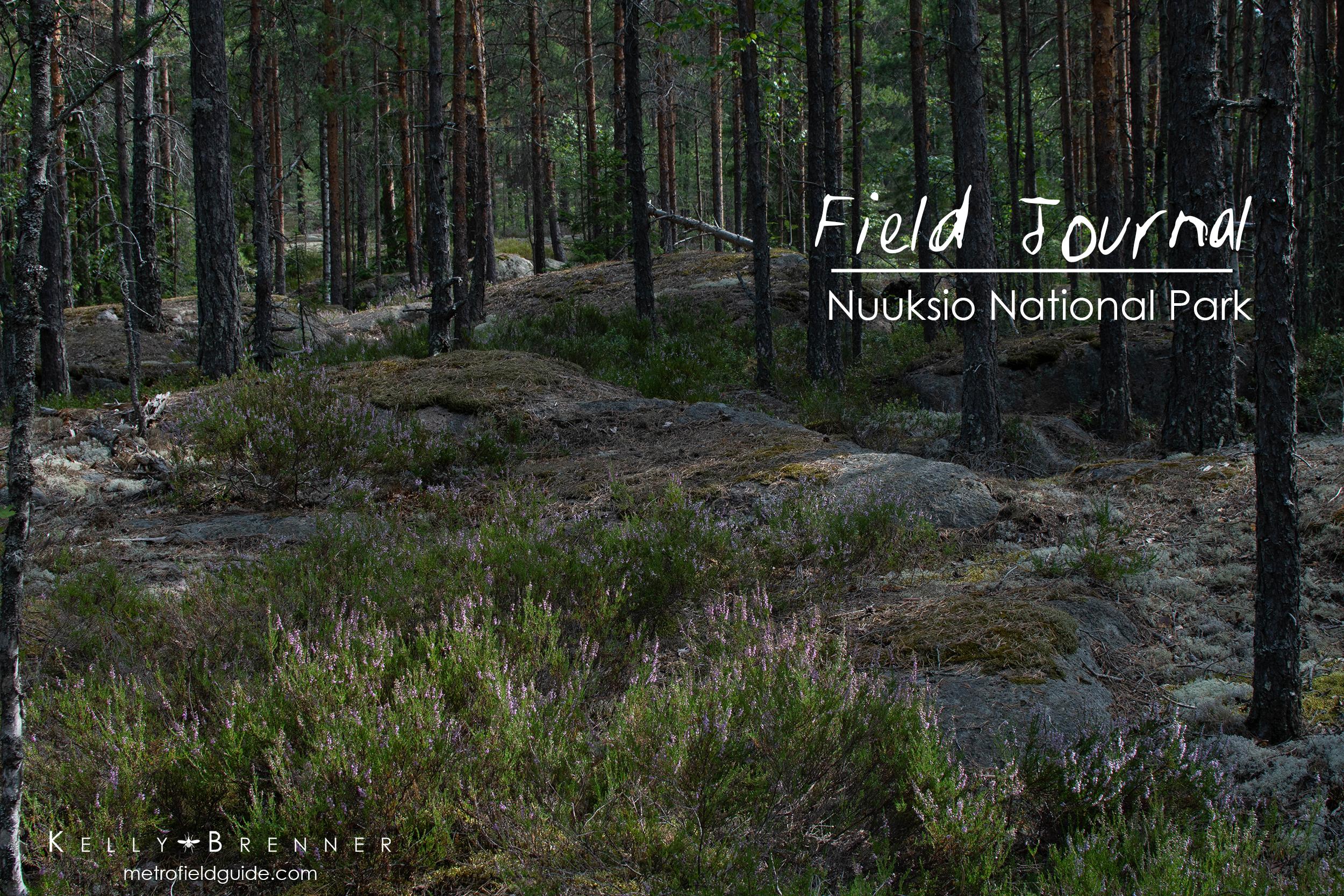 Field Journal: Nuuksio National Park