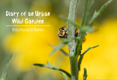 Diary of an Urban Wild Garden: Backyard Bees