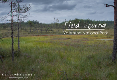 Field Journal: Valkmusa National Park