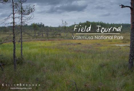 Field Journal: Valkmusa National Park