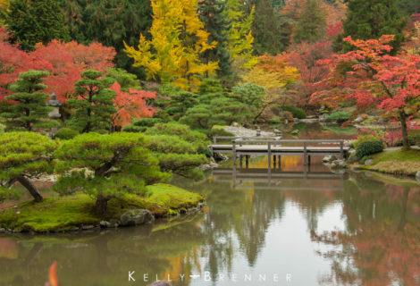 Japanese Buddhist Gardens