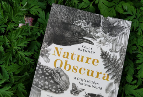 Kelly Brenner in Conversation with Seattle Audubon