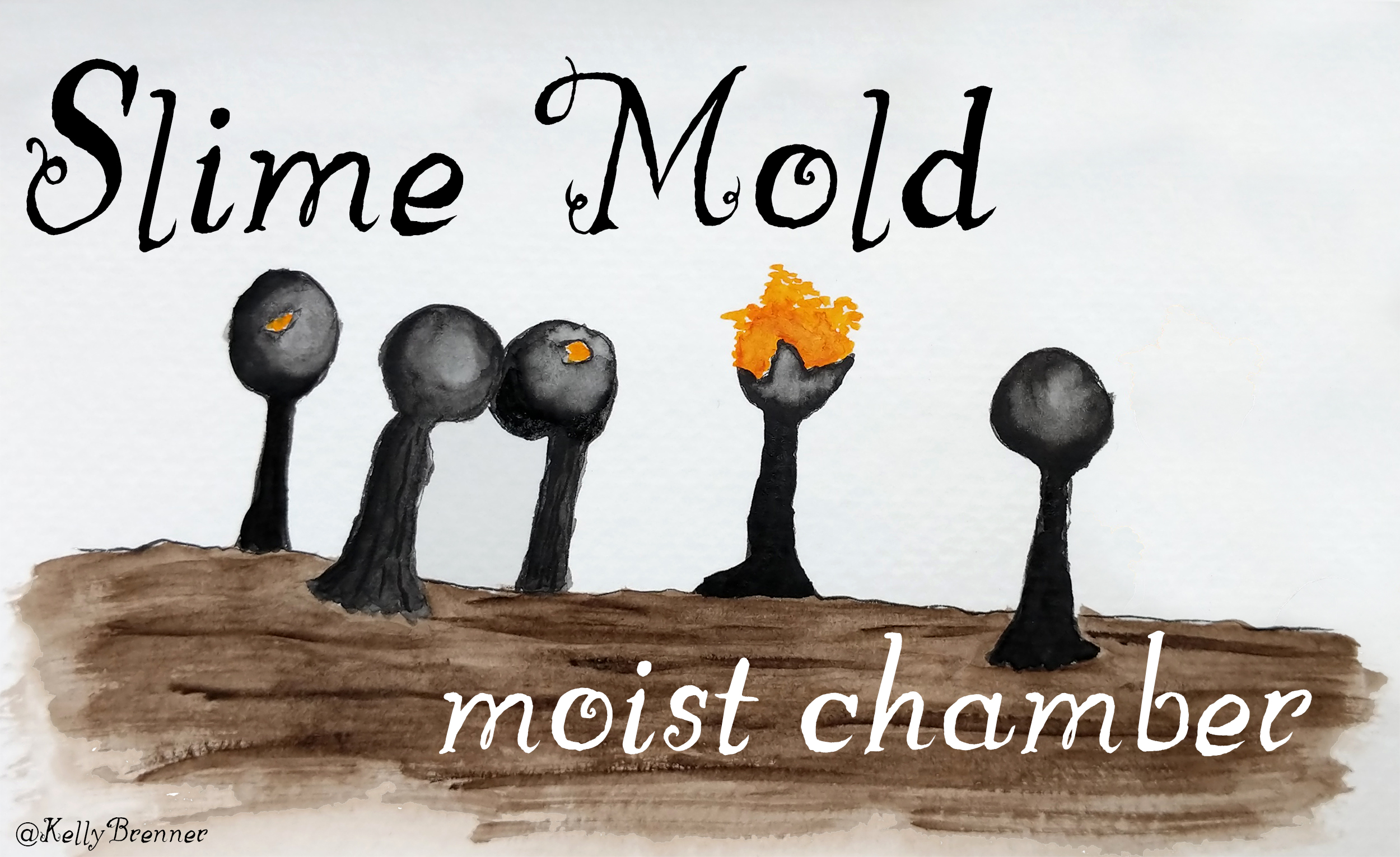 How to Create a Slime Mold Moist Chamber
