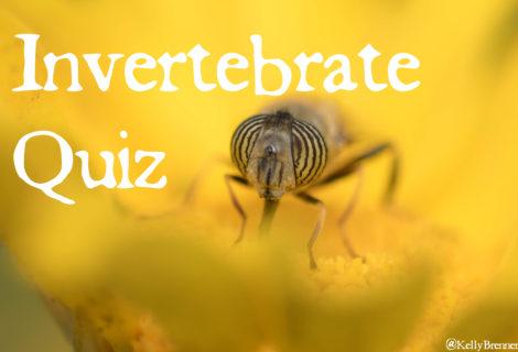 Invertebrate Quiz: What Doesn't Belong?