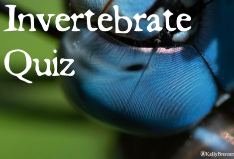 Invertebrate Quiz: Here's Looking at You