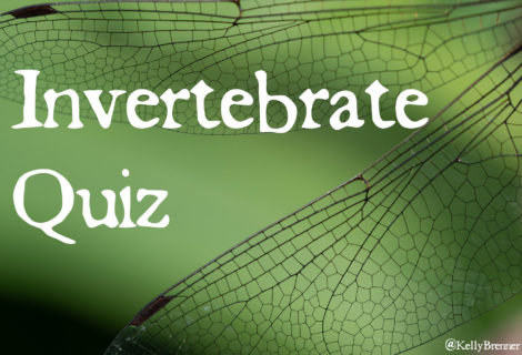 Invertebrate Quiz: Take Flight